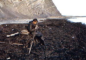 Setting up while seated on a large seaweed midden.